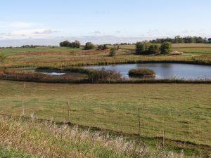 photo of Iowa pond by Julia Venzke